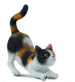 Pisica domestica in trei culori