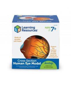 Jucarie educativa Model sectiunea Ochiului, 13 cm, 7-10 ani